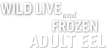 Live and Fresh Frozen Seafood